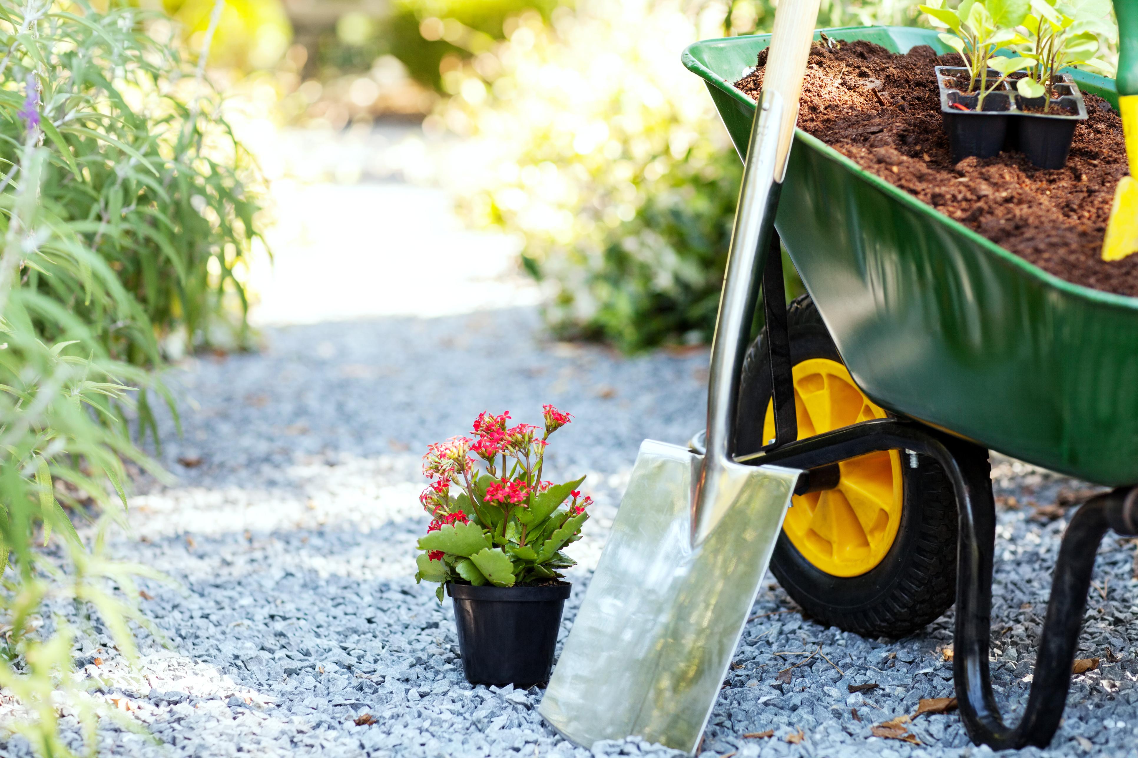 Wheelbarrow with shovel and flower pot in garden.